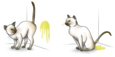 cat6.1.jpg
