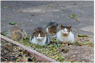 cat6.12.jpg