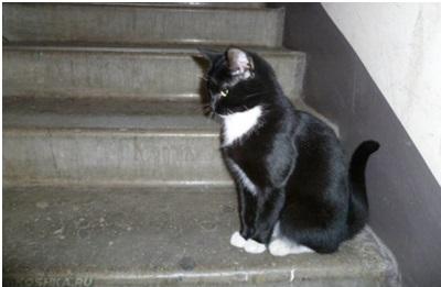 cat6.13.jpg