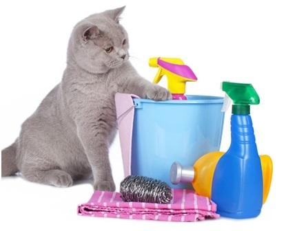 cat6.6.jpg