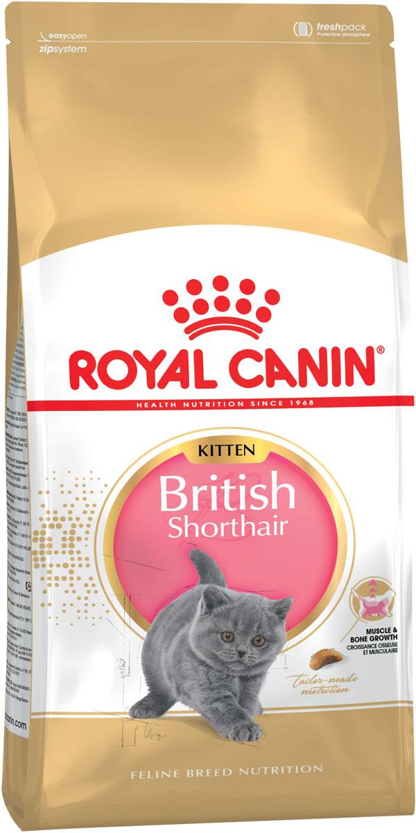 Royal Canin British Shorthair Kitten 34 для британских короткошерстных котят (0,4 + 0,4 кг)