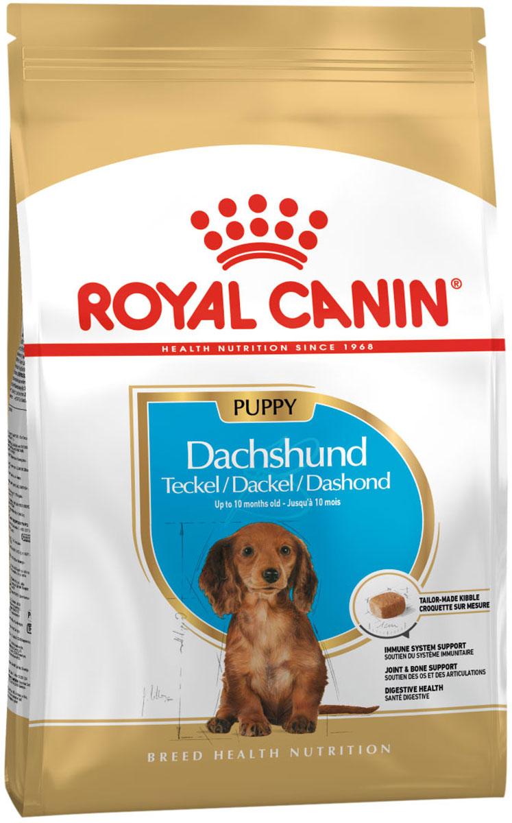 Royal Canin Dachshund Puppy для щенков такса (1,5 кг) фото