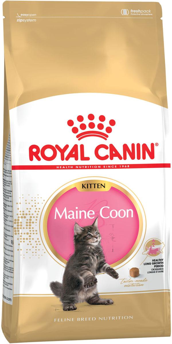 Фото #1: Royal Canin Maine Coon Kitten 36 для котят мэйн кун (2 + 2 кг)