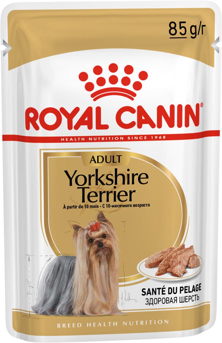 Фото - Royal Canin Yorkshire Terrier Adult для взрослых собак йоркширский терьер паштет (85 гр) корм для собак royal canin yorkshire terrier 28 для породы йоркширский терьер от 10 мес птица сух 500г