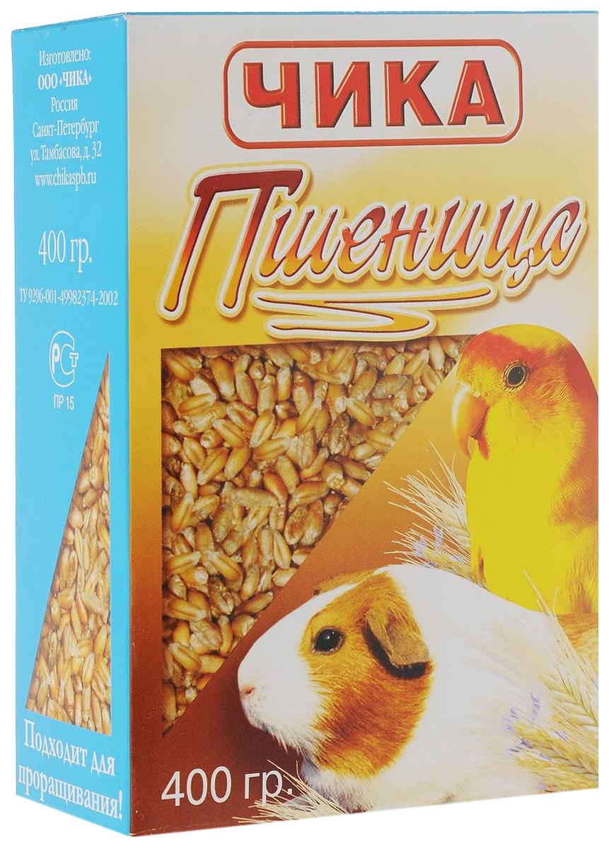 чика пшеница для птиц и грызунов (400 гр).