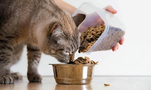 Оттого консервы чем какого-нибудь купить корм собака другого подходят ради домашних собак?